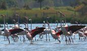 Rota dos Flamingos 1H30